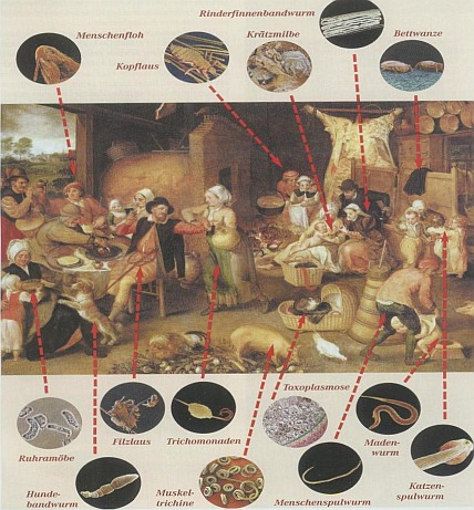 animal use and pathogens from middle ages